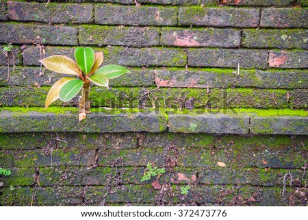 Red old concrete brick wall with green moss and root texture background - stock photo