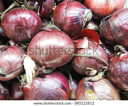 Red onion of Serbia