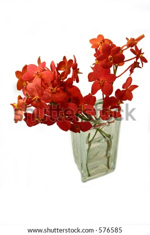 red orchid 02