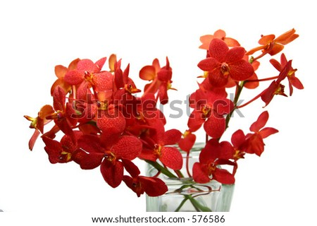 red orchid 03 - stock photo