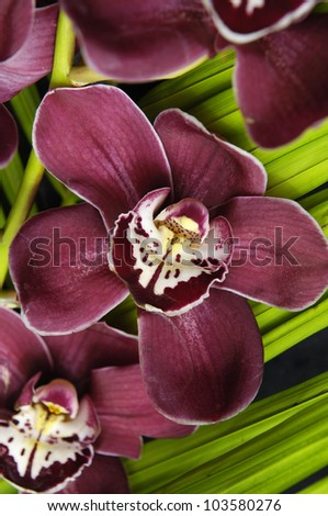 Red orchid and green plant background - stock photo
