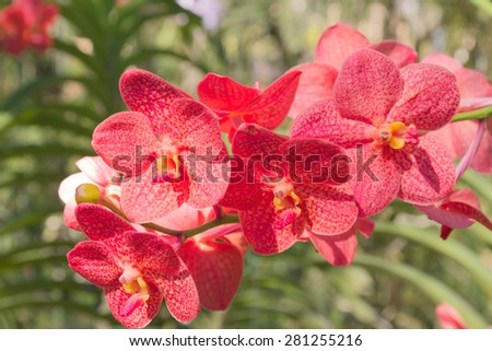 Red orchid in a sunshine day - stock photo