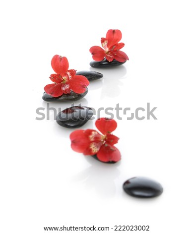 Red orchid on black stone - stock photo