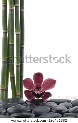 Red orchid with bamboo grove and black stones - stock photo
