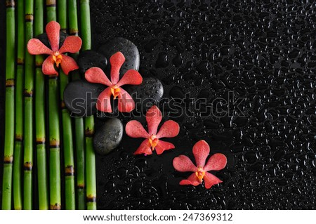 Red orchid with bamboo grove on wet  - stock photo