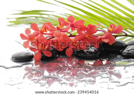 Red orchid with black stones with green palm background - stock photo