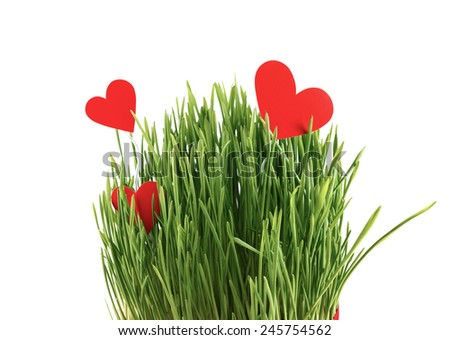 Red paper hearts in green grass isolated on a white background. - stock photo