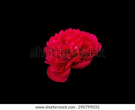 Red peony closeup isolated on black. - stock photo