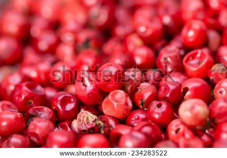 Red Peppercorns  - stock photo