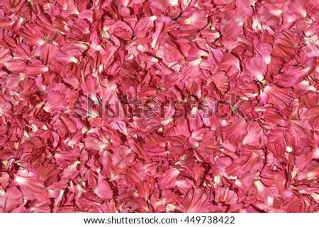 Red petals with some pink flower. Usable as a background