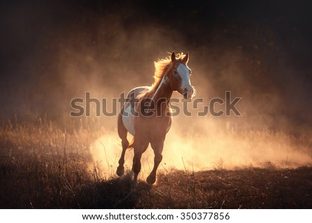 red piebald horse run in the dust