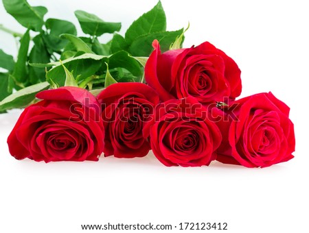 red pink roses isolated on white background