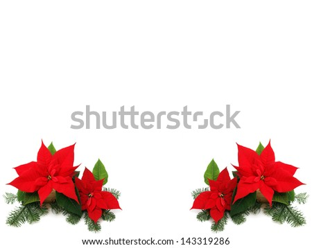 Red poinsettia isolated - stock photo