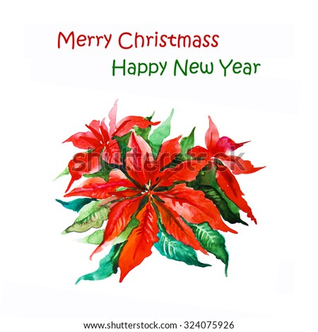 Red poinsettia plant for Christmas white background - stock photo