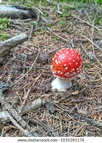 Red poisonous mushroom is known as a toadstool in a forest