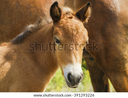red pony colt with a light mane standing on a background of green leaves and grass