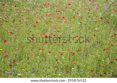 Red poppies and wild flowers growing in meadow - stock photo