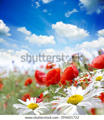 Red poppies,chamomile on green field  - stock photo