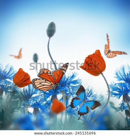 Red poppies field and blue cornflowers with butterfly - stock photo