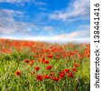 Red poppies on a background of blue sky with clouds - stock photo