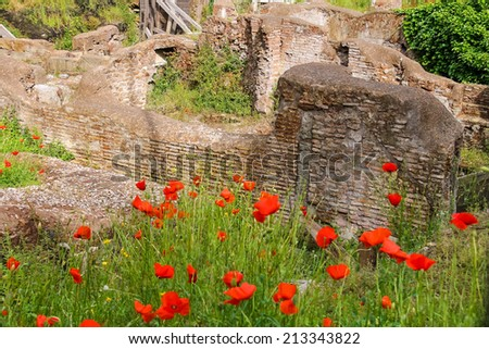 Red poppies on excavations in the historic part of Rome, Italy - stock photo
