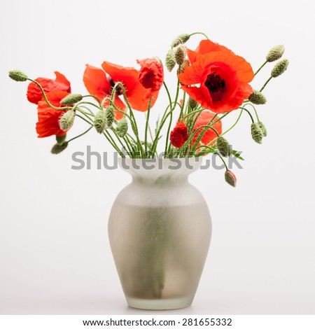 Red poppies (Papaver rhoeas) and buds in a vase - stock photo