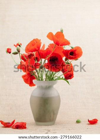 Red poppies (Papaver rhoeas) and buds in a vase with burlap texture - stock photo