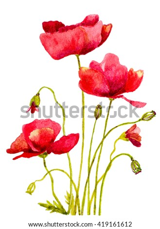 red poppies watercolor handmade painting  - stock photo