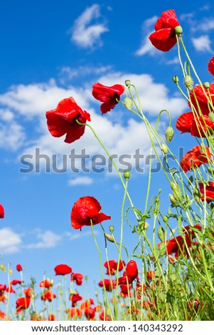 red poppy against blue cloudy sky - stock photo