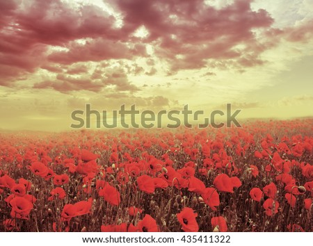 Red poppy field over sunset, Brittany France - stock photo