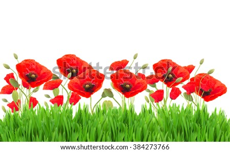 Red  poppy flowers with buds border isolated on white background - stock photo