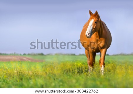 Red pregnant mare in spring pasture - stock photo