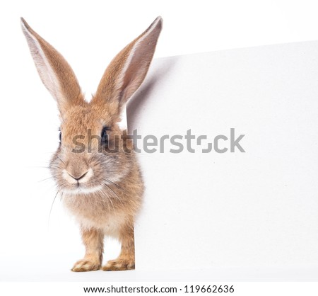 Red rabbit ( bunny ) and empty white board