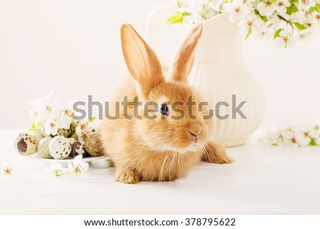 Red rabbit with Easter eggs on white background - stock photo