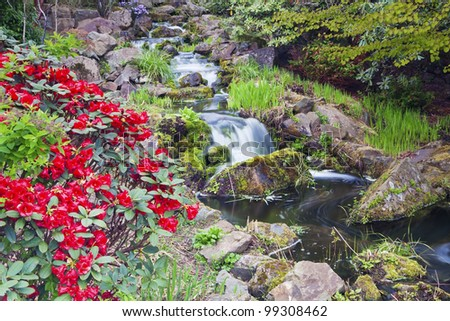 Red Rhododendron flowers and a cascade in Chinese garden of Edinburgh Royal Botanical Garden - stock photo