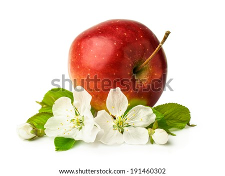 red ripe apple with blooming  isolated on white - stock photo