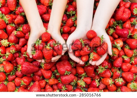 Red ripe fresh strawberries in kids hands on strawberry background. - stock photo