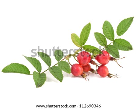 Red ripe rose hips with leaves isolated on white - stock photo