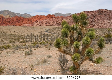 Red Rock Canyon near Las Vegas in Nevada. - stock photo