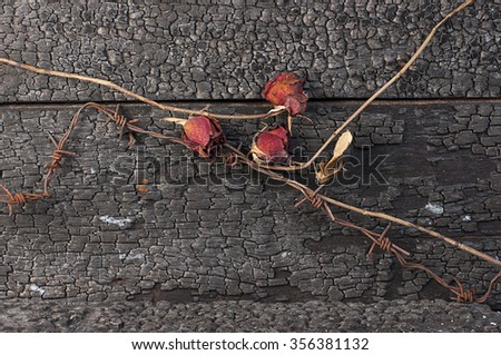 red rose and three rusty barbed wire on Timber caught fire background - stock photo