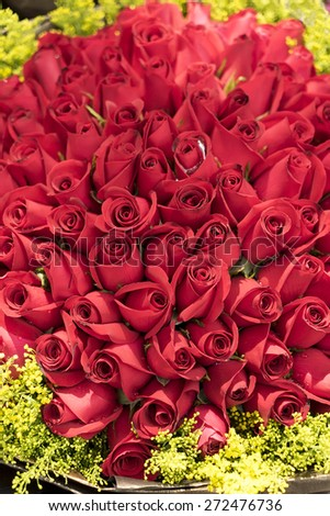 red rose background ,natural texture - stock photo