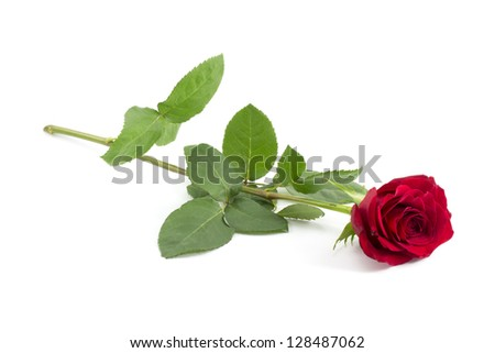 red rose bud on a long green stem - stock photo