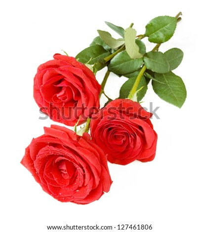Red rose bunch isolated on white background - stock photo