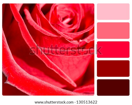 Red rose color palette with complimentary swatches. - stock photo