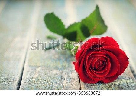 Red rose flower on vintage wooden background - stock photo