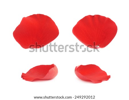 Red rose flower petals isolated over the white background, set of four images