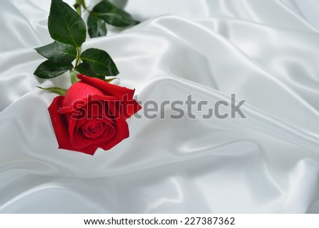 Red rose flowers on white cloth