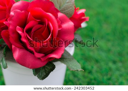 Red rose in a white pot for Valentine's Day - stock photo