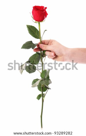 Red rose in hands over white background - stock photo