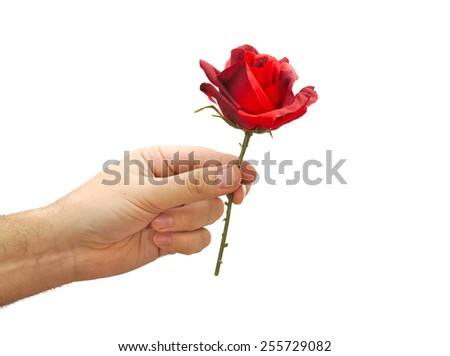 Red rose in man hand isolated on white background. Valentines day concept - stock photo